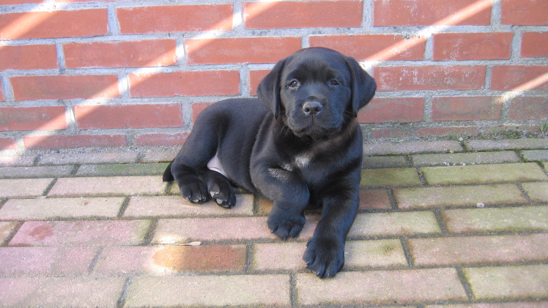 Proteq Hondenverzekering