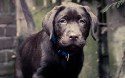 Rooz is bevallen van 9 gezonde pups!